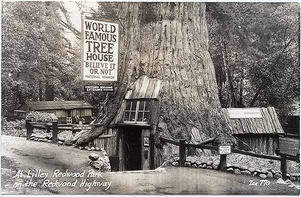 Tree Houses California California Redwood Tree